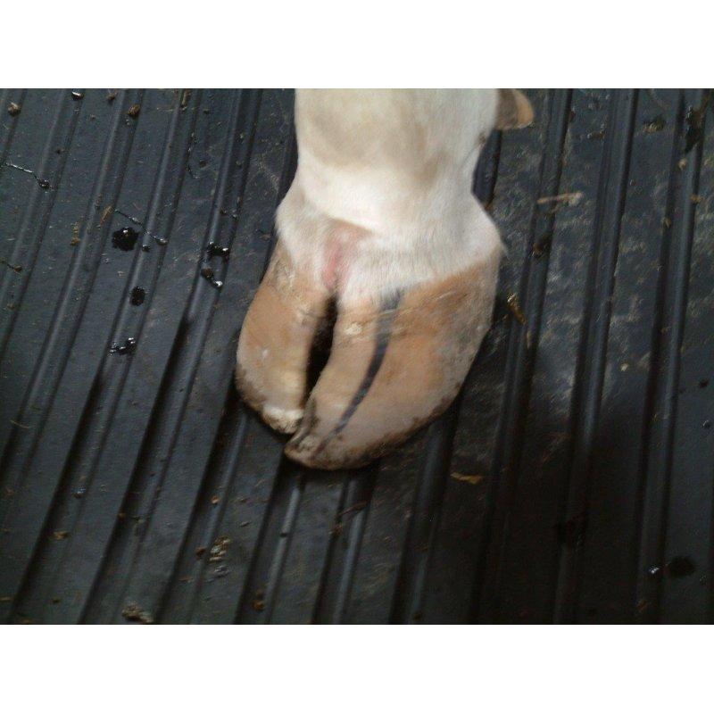 Mata legowiskowa dla zwierząt gumowa hodowlana